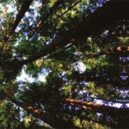Assis Sous Un Chêne